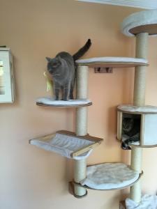 Gastkatzen (1)